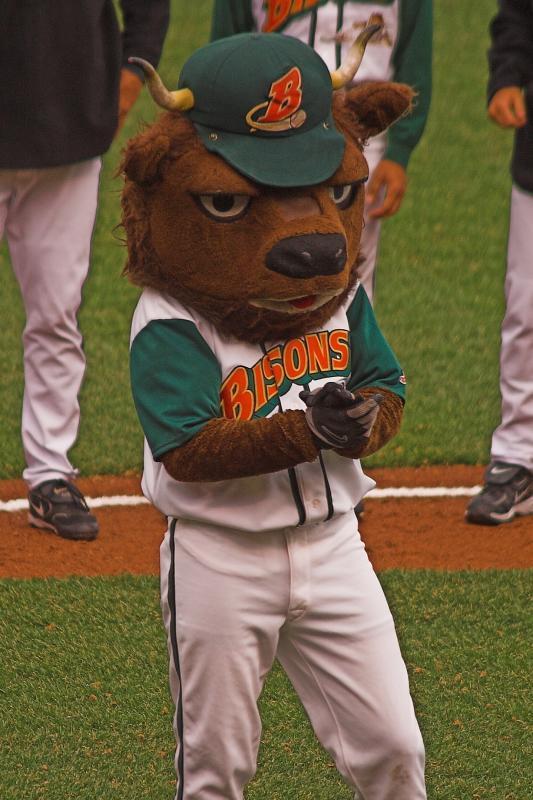 Buster Bison