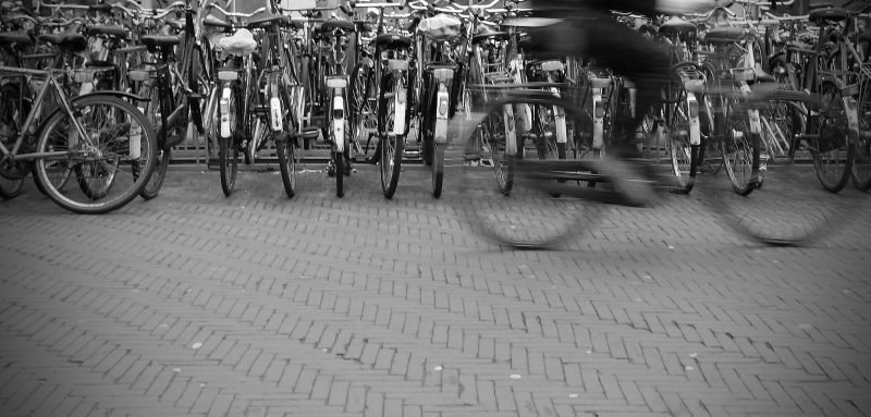 Spring in den Haag 2008-04-03 4774.jpg