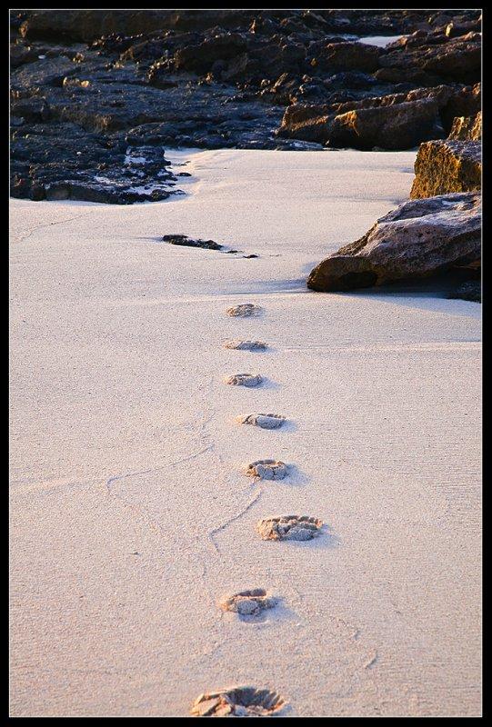 Min hustrus spor i sandet
