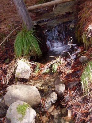 Mariposa Grove Creek