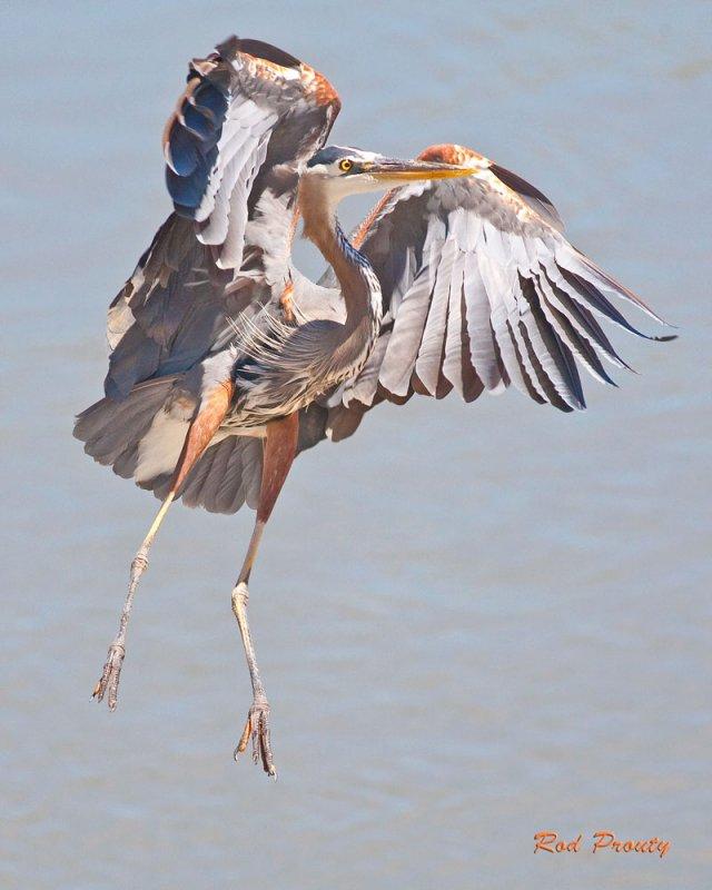 0006-Heron.jpg