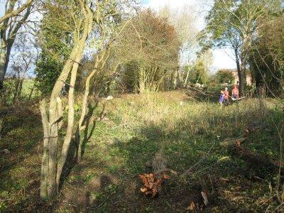 Tirforing trees