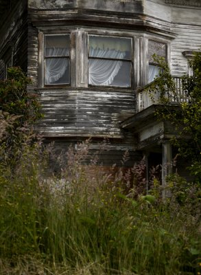 Among the weeds, Astoria, Oregon, 2009