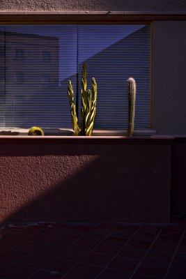 Cactus, The Westward Ho, Phoenix, Arizona, 2009