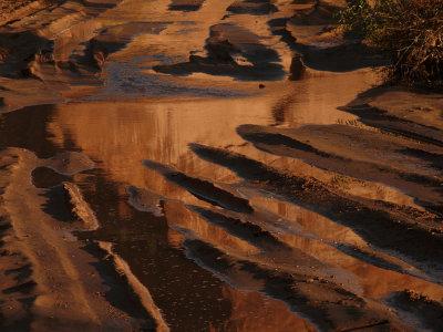 Golden puddle, Canyon de Chelly National Park, Arizona, 2007