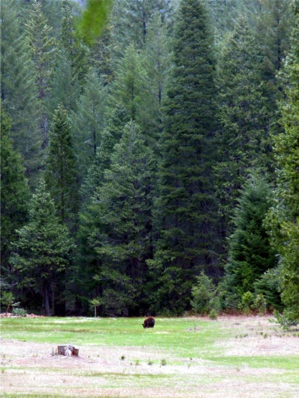 Good bears are far away bears