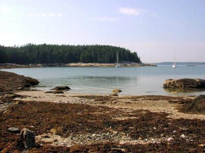 McGlathery Island - East Side