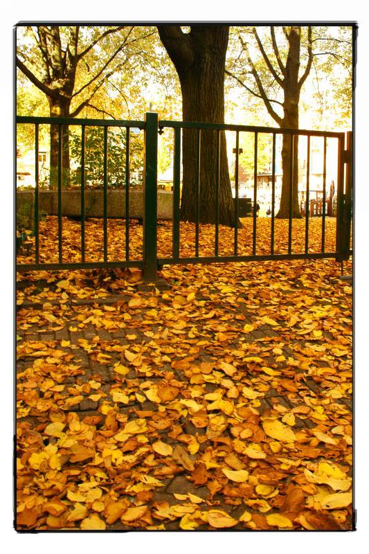 autumn on Prinseneiland