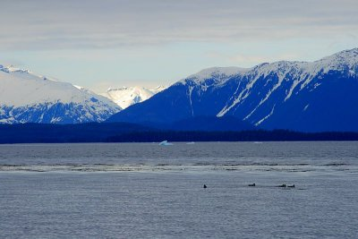 Frederick Sound, mountains, icebergs