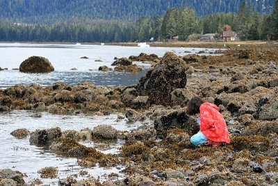 Examining marine biology
