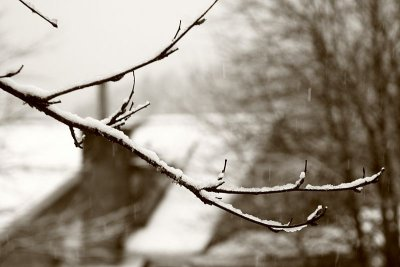 Snow covered branch