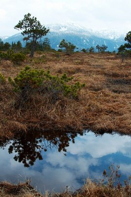 Muskeg reflections