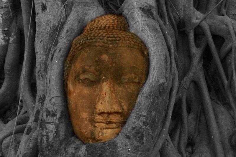 Buddha in tree history brush and brush tool cropped 2.jpg