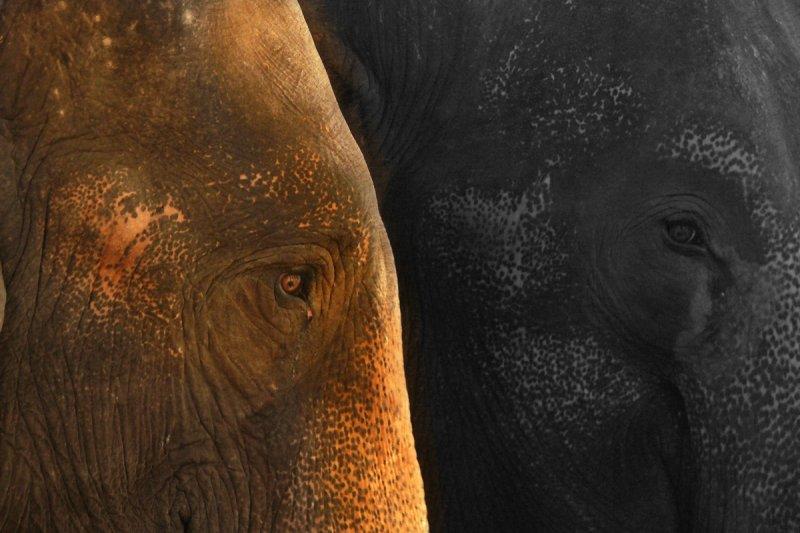 Two elephants web.jpg