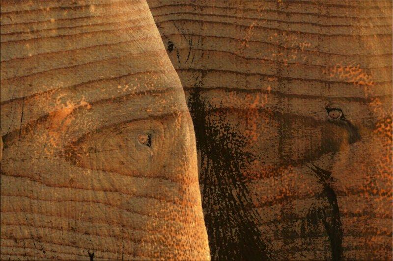 Two elephants grunge web.jpg