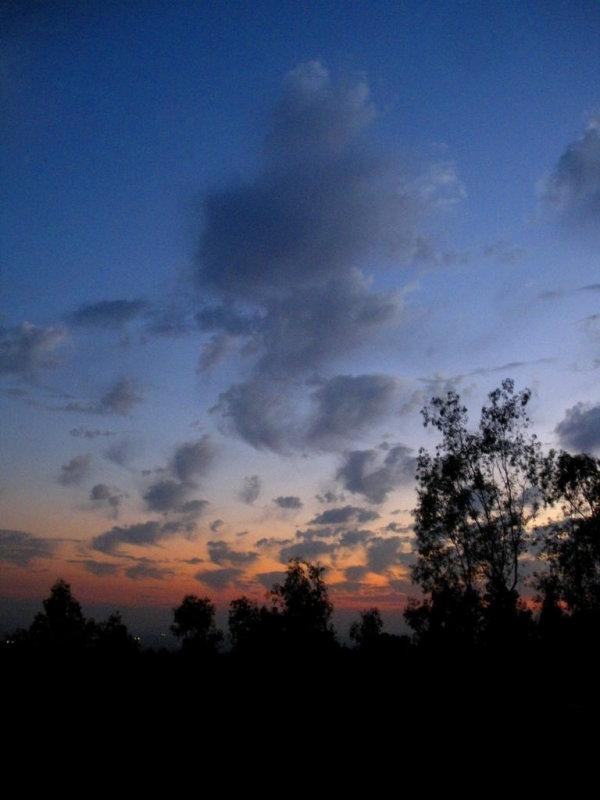 sunsetseahorse.jpg