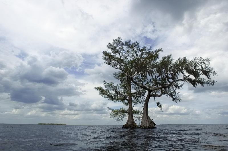 Two Cypress w Clouds - Lake Istokpoga