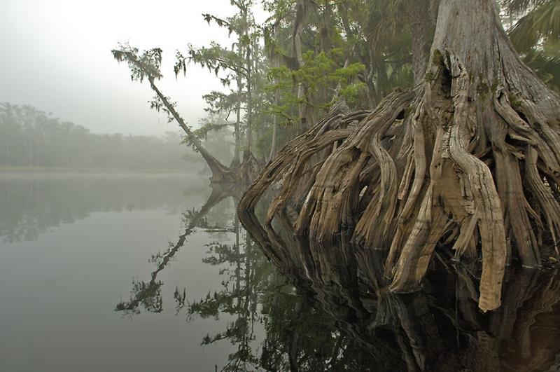 Fisheating Creek Foggy Morn