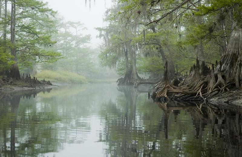 Fisheating Creek Foggy Morn 4
