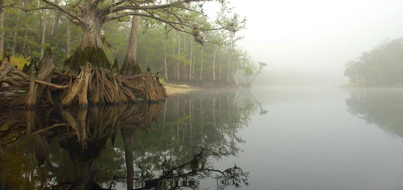 Fisheating Creek Foggy Morn5