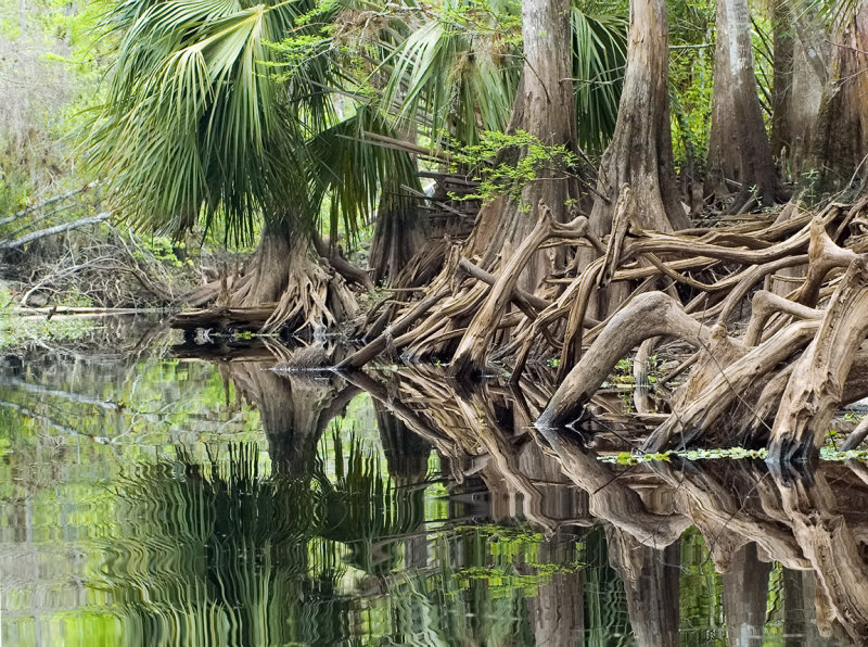 Fisheating Creek Exposed