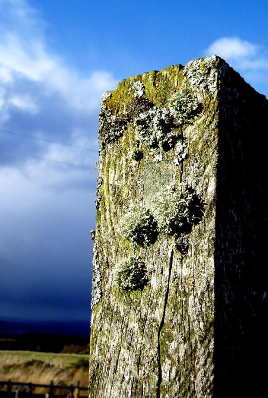 Lichen and post