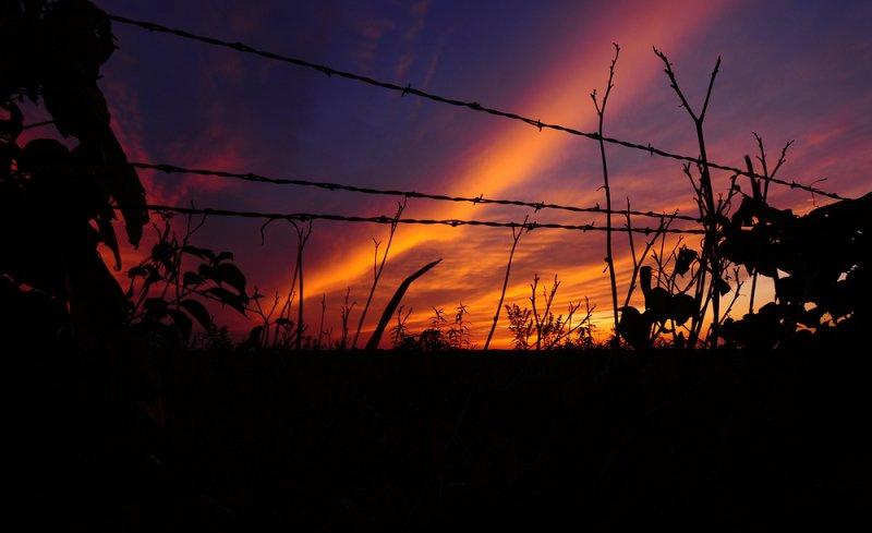 Fence Row Sunset