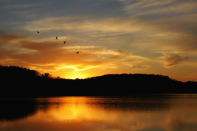Geese & Reservoir
