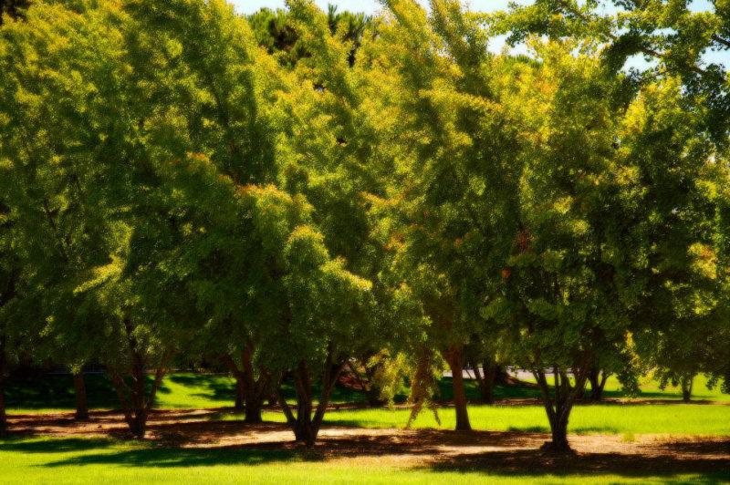 September 12- Trees