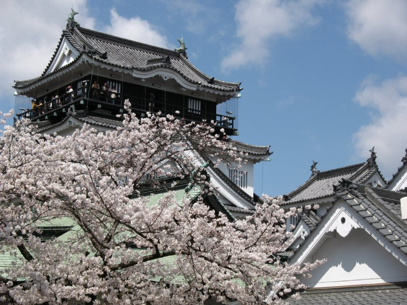 Okazaki-jō and sakura