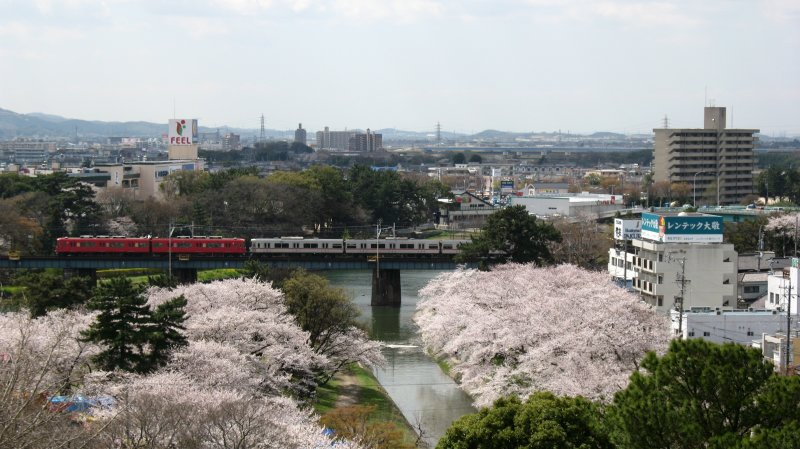 Passing Meitetsu train and sakura