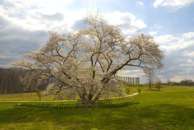 Capital Columns National Arboretum