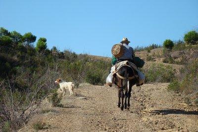O Velho, o Burro e o Cão // The Old Man, the Donkey and The Dog