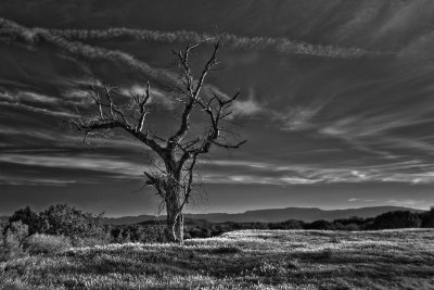 Boyton Valley Tree   #8102_4_3_B&W  See image in color - previous