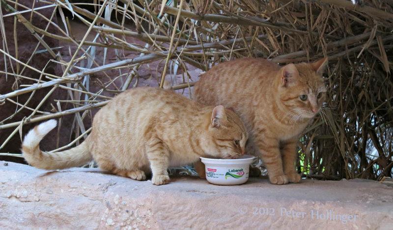 Petra Kitties