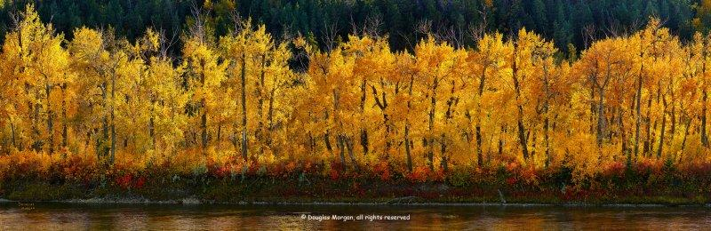 Fall on the river bank (9538-9748)
