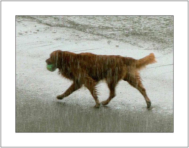 Rain: Wet Dog
