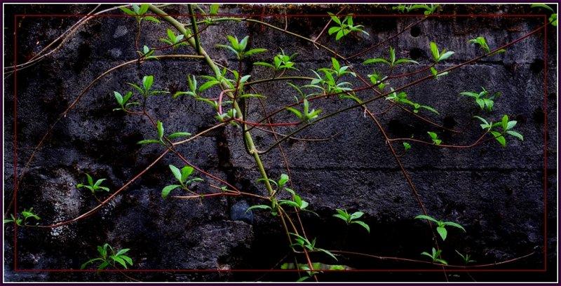 Life Grows.Everywhere.jpg