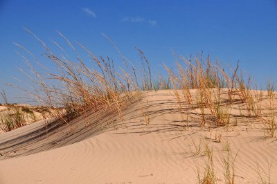 Amber waves of dead grass