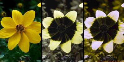 La flor, un diseño inteligente Medium