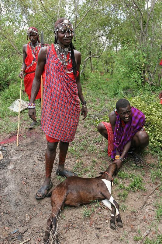 Sacrifice de deux chèvres en lhonneur de notre visite