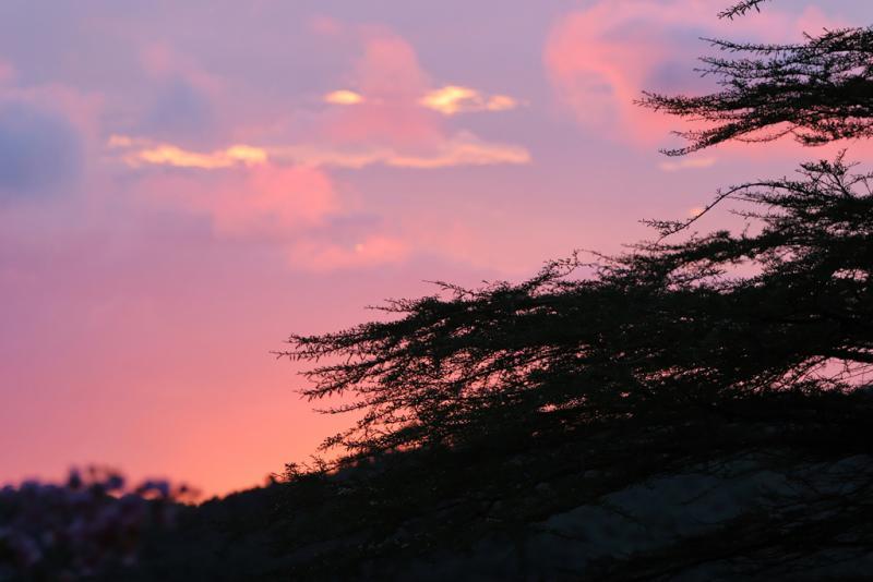 Couché de soleil au-dessus de la savane.