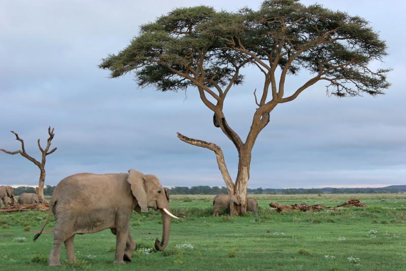 Premier safari dans la réserve de Amboséli