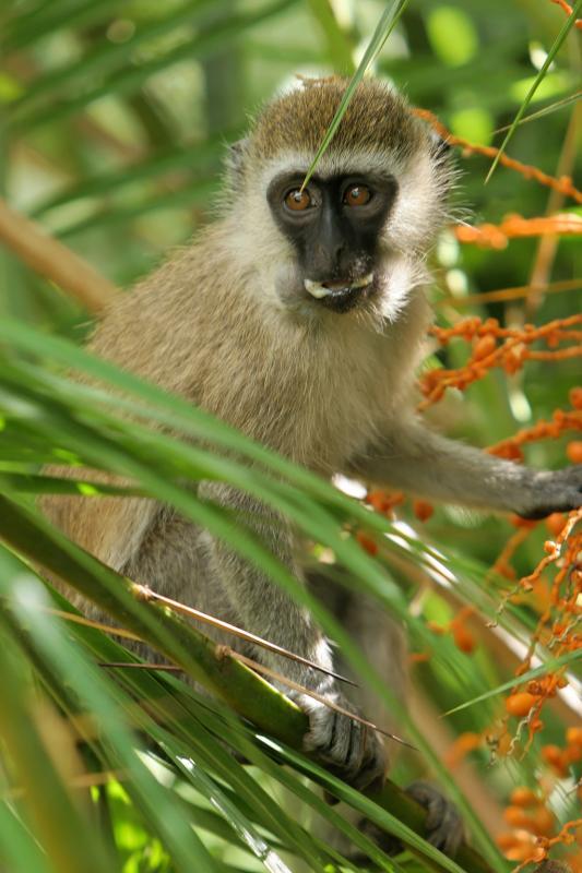 Photos faites dans notre lodge de la réserve dAmboséli
