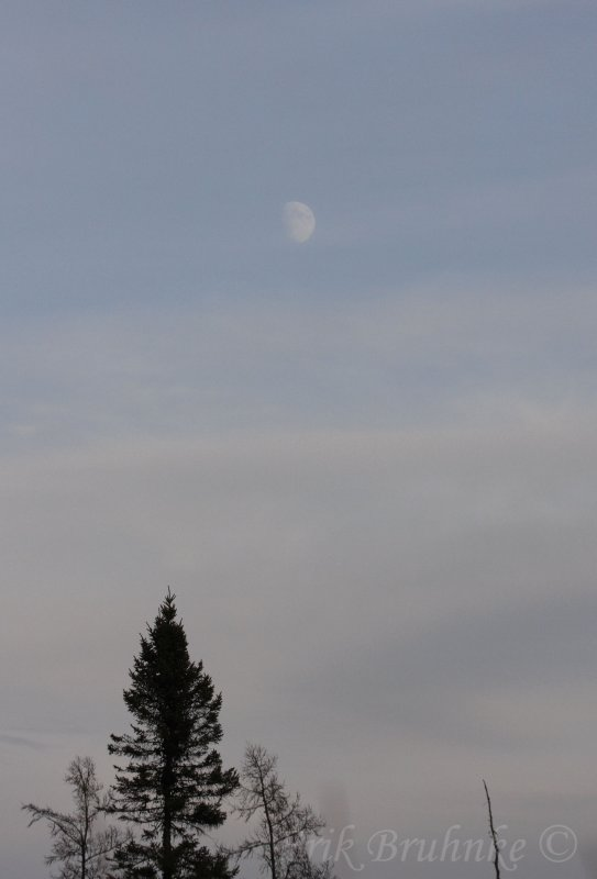 Afternoon Moon in the Bog