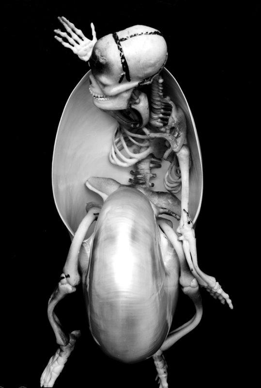 JCs skeleton