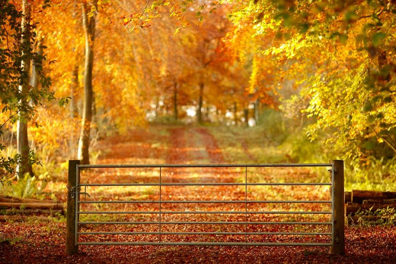 20111107 - Autumn Gate