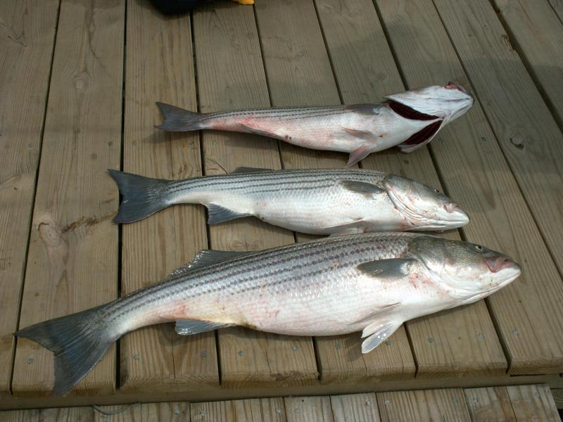 fish050104.jpg