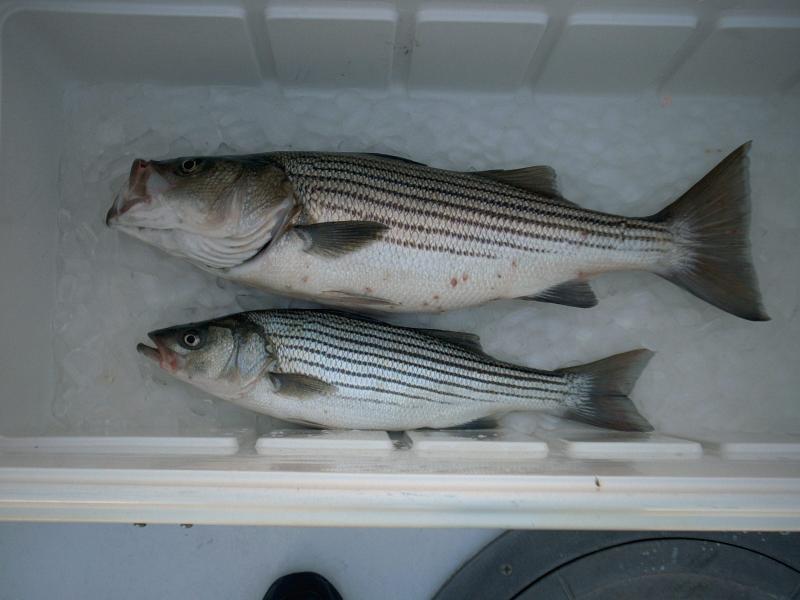 Fish11704.jpg