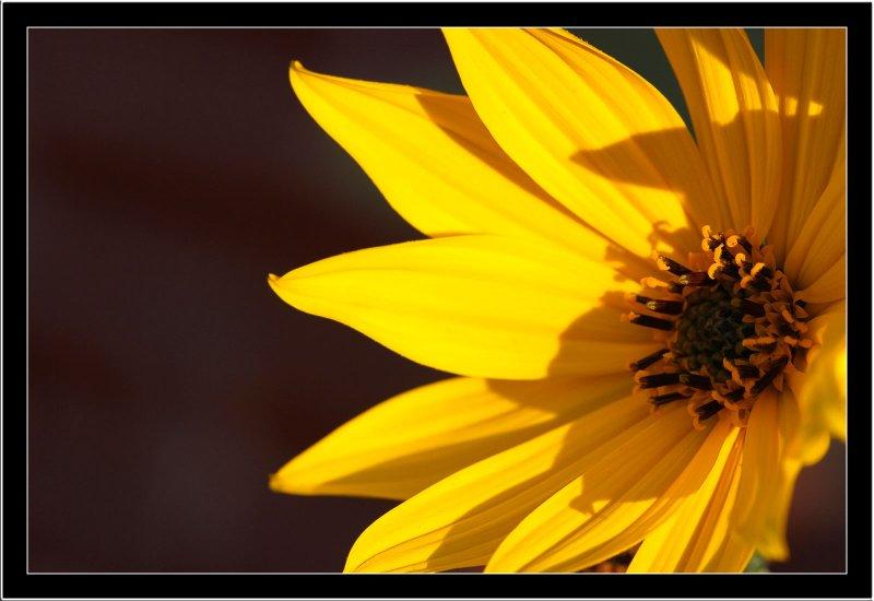 110909 - Yellow